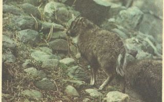Охрана животного мира: красная книга и основные принципы