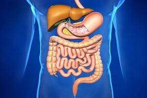Общий план строения пищеварительной системы человека и методы ее исследования - Для студента