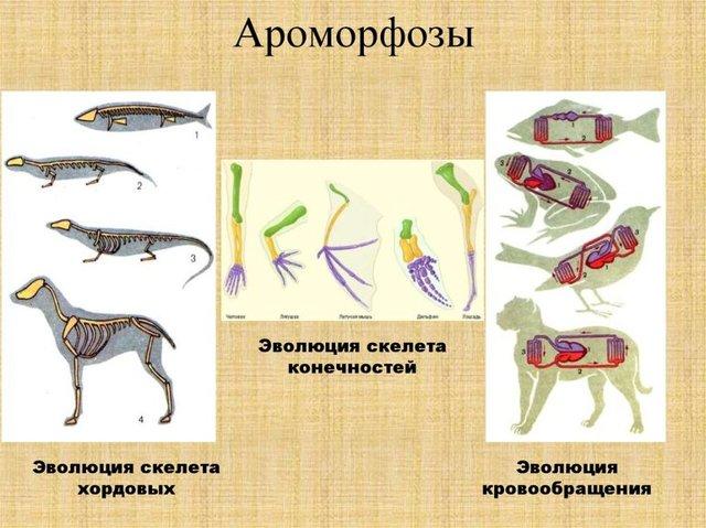 Основные этапы исторического развития животного мира - Для студента
