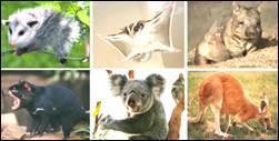 Класс Млекопитающие. Общая характеристика класса - Для студента