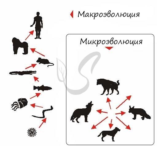 Структура вида. Понятие о популяции и подвиде - Для студента
