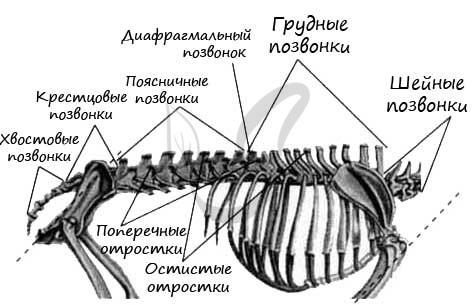 Разнообразие млекопитающих - Для студента