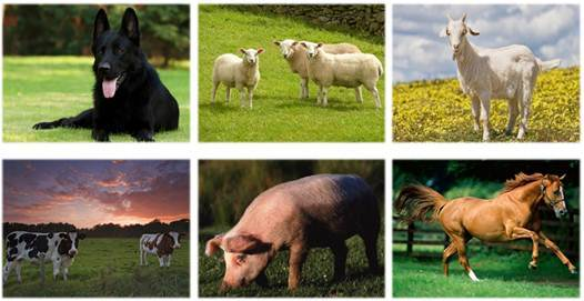 Значение млекопитающих в природе и жизни человека - Для студента