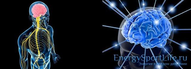 Биология человека как наука - Для студента