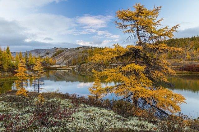Особенности природы, вечная мерзлота Северо-Восточной Сибири - Для студента