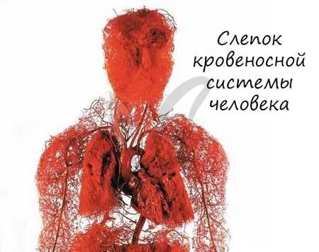 Кровообращение - Для студента