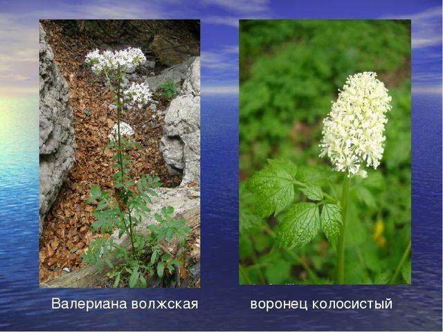 Особо охраняемые территории Урала - Для студента